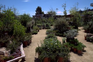 Gardens with 100% native California plants