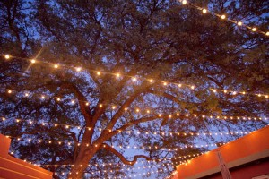 Under the white lights on Enotria's patio