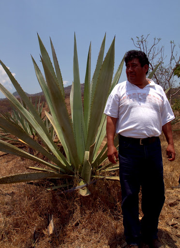 Mezcal distiller walks us through agave fields