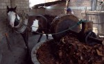 "The more ""modern"" method of crushing agave with a horse and cement wheel"