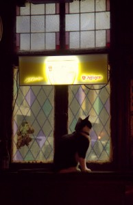 Unforgettable: cat in the window at Gollem