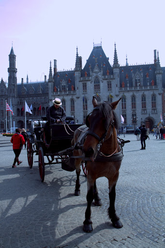 Carriage rides around the city