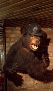 PDT's friendly bar bear
