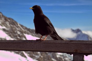 At the highest point in Europe - communing with the birds