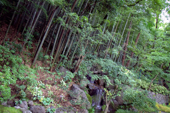 Bamboo forests behind the distillery